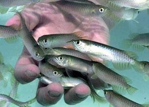 fish_ozone_generator